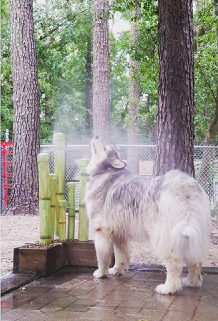 Daycare grooming boarding training graced kennel grooming offers daycare boarding grooming training in augusta ga serving the csra since 2008 solutioingenieria Image collections