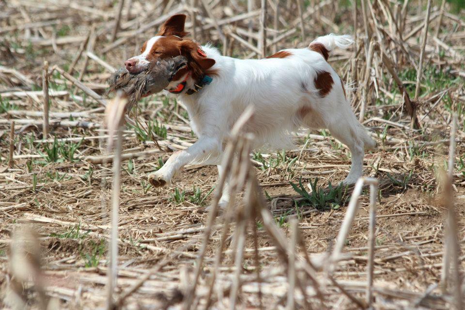 Hunting, Pheasant - Pheasant Valley Farm - Reading, Pa