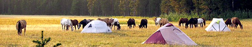 Yellowstone National Park, Bechler pack trip, pack trip, horses, adventure