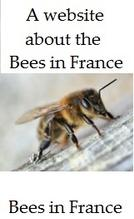 Beekeeping-and-bees-in-France