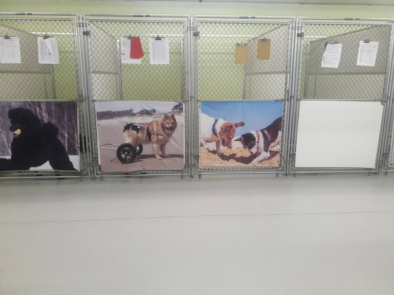 Daycare grooming boarding training graced kennel grooming these runs are very calming for the antisocial or aggressive personalities can also be used for smaller breeds or those who need more privacy solutioingenieria Image collections