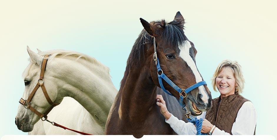 Kate Oconnell - Horse Boarding, Horse Stable, Horse Boarding