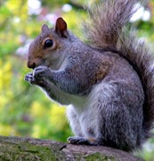 squirrel removal prospect, squirrel control prospect, squirrel problems prospect, squirrel in attic prospect, squirrel in chimney prospect, squirrel in fireplace prospect, squirrel chewing prospect, squirrel scratching prospect