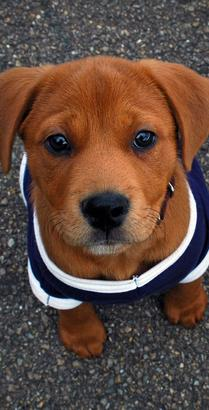 High Country Puppy Rescue Flagstaff Az Pet Adoption Home