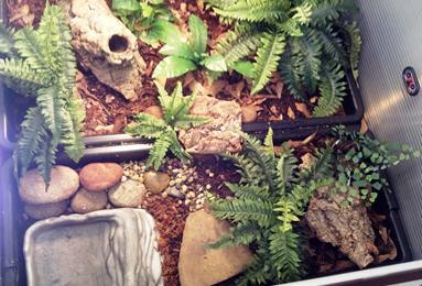 Habitat Examples