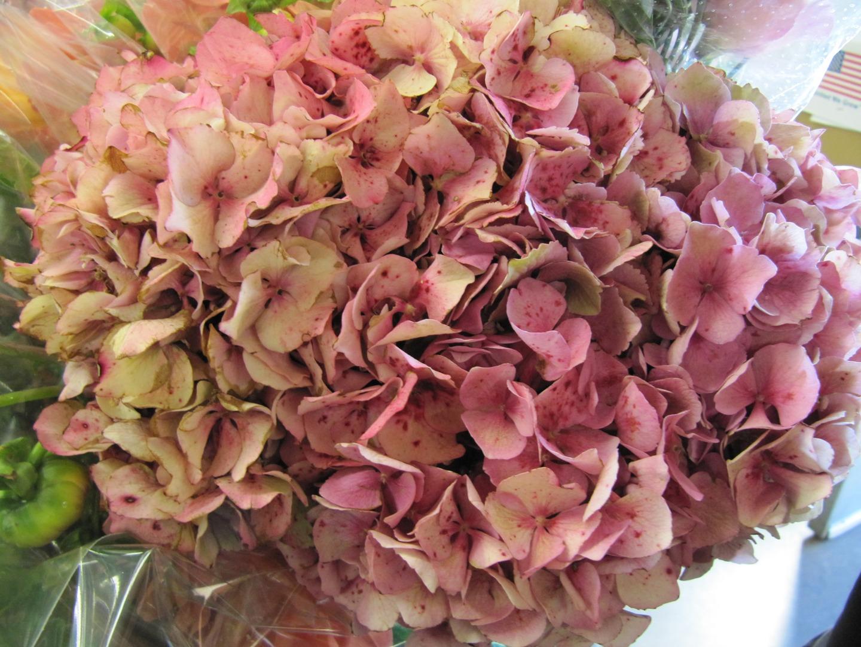 Sf flower mart in san francisco ca sffm izmirmasajfo Image collections
