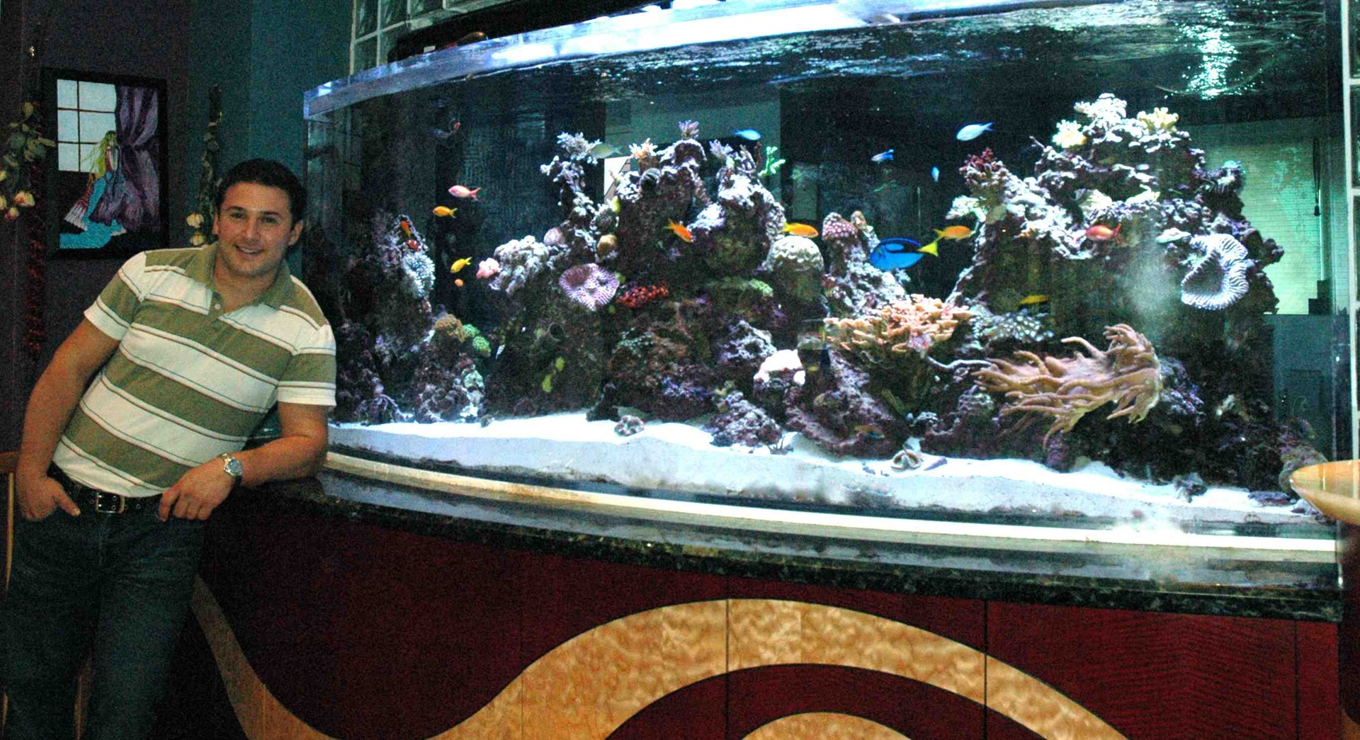 Freshwater aquarium fish maintenance - Limited Edition Corals Saltwater Aquarium Maintenance Saltwater Aquarium Fish Saltwater Aquarium Setup Other
