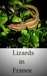Photo-Native-Lizards-of-France