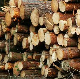 CFI Solutions for Wood & Forest Products