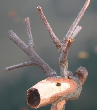 DIY Wood Branch Reindeer Christmas Decoration