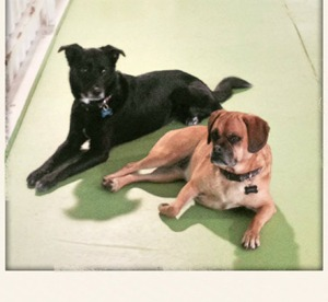 Grooming daycare boarding dawg tired augusta ga if youre anything like us you have an incredible connection with your dogs when youre out of town you want to make sure theyre with someone who will solutioingenieria Image collections