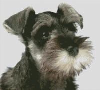 Cross Stitch Chart of a Schnauzer