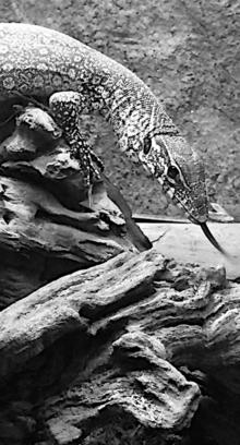 Texas Reptile and Small Animal Rescue