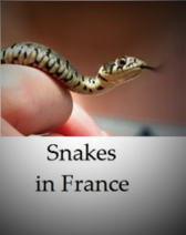 Snakes-to-be-found-in-France