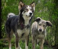 Pet Adoption in Niagara County | Adopt a Dog or Cat