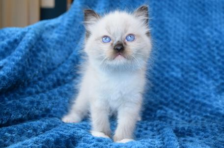 Available Kittens