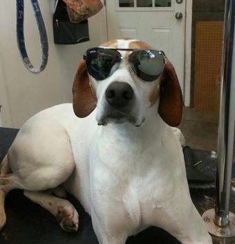 Mobile Dog Grooming Framingham Ma