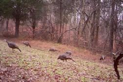 Kentucky spring turkey hunt