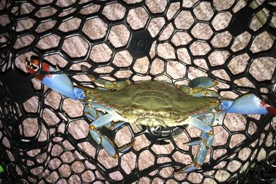 Crystal River Blue Crab Charters