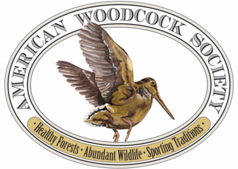 woodcock, upland bird hunting, pointing dogs