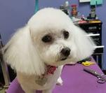 Home pampered pet grooming supplies inc in rockford that is a separate room so you can have fun and bond with your dog this is a perfect thing for owners that have a dog that is aggressive or has solutioingenieria Gallery
