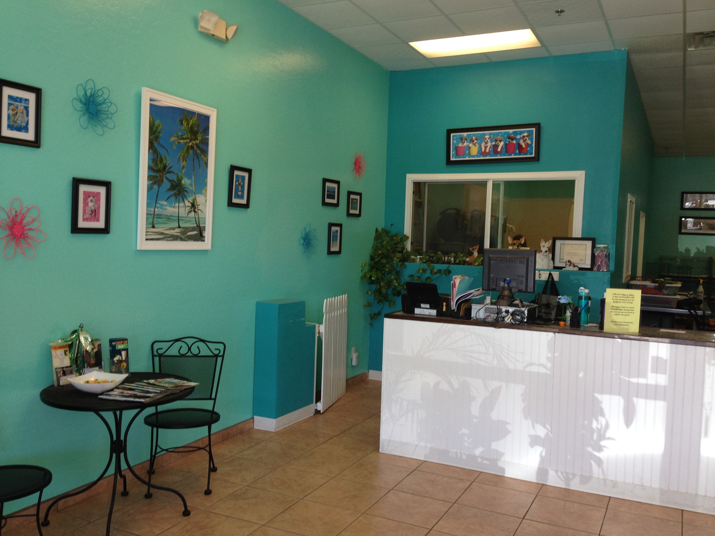 Pet Haircuts - A Day in Paradise Dog Grooming dog hair styles mesa