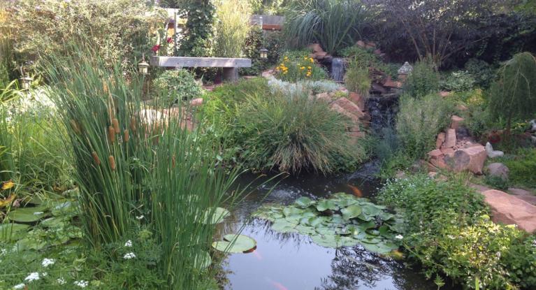 Pond plants for Garden pond plants uk