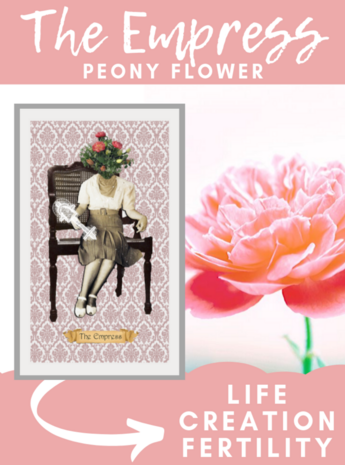 The Empress Peony Flower Floriography Tarot