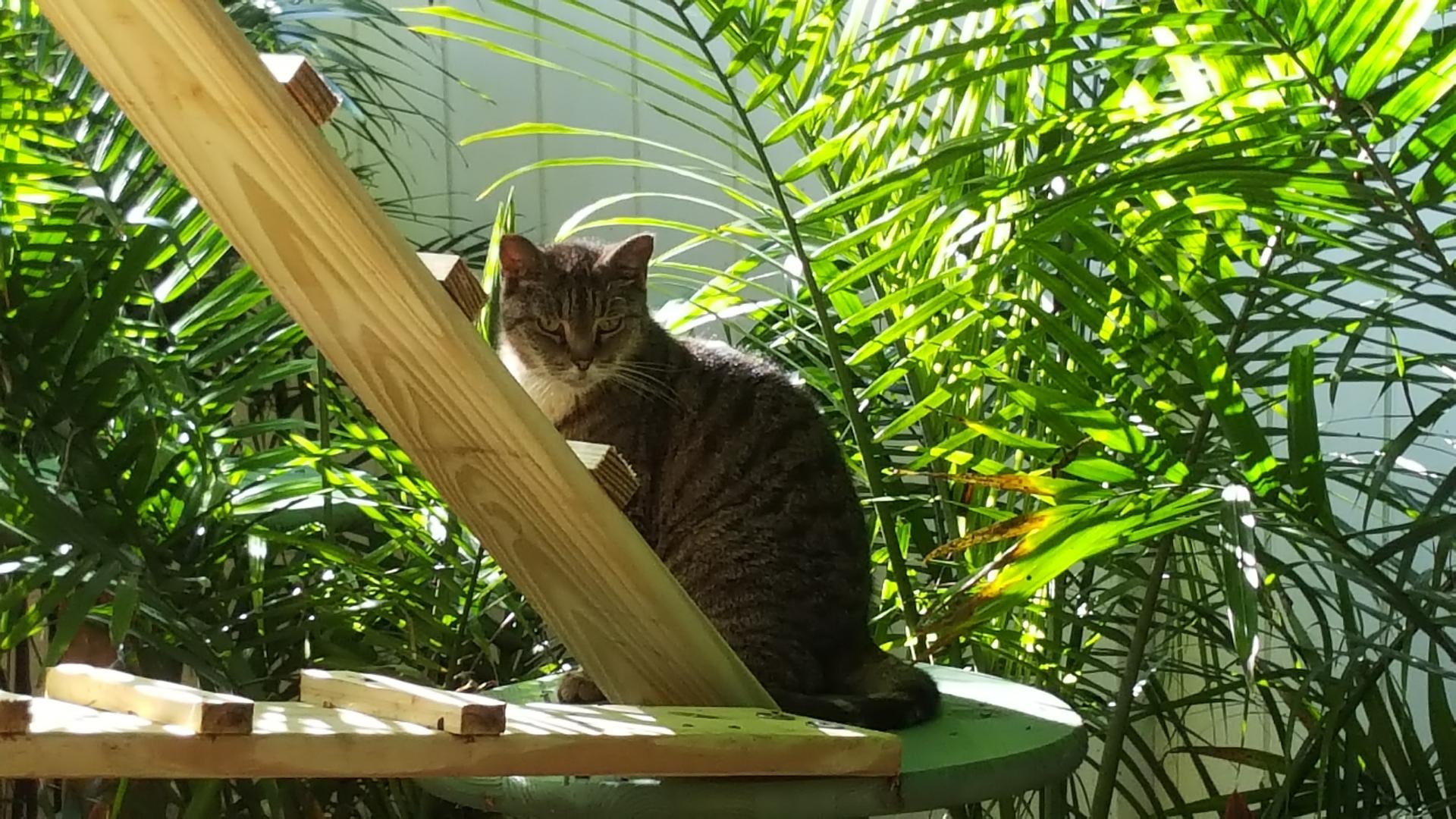 Senior Cat Sanctuary