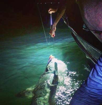 Tiger Shark Fishing at Night