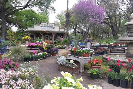 The front entrance of Wilson Landscape Nursery and Florist in Helotes Texas at 14650 Bandera Road with a wide variety of native, annual, perennial flowers and plants for sale