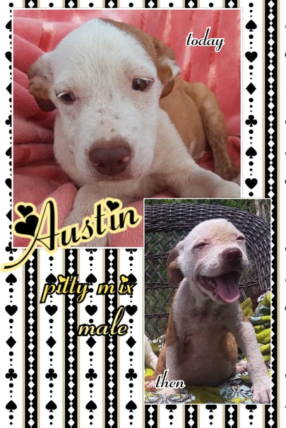 Animal Rescue, Dog Adoptions - Amazing Mutts Puppy Rescue