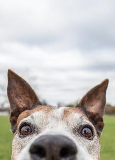 If your dog could take a selfie picture of a dog face