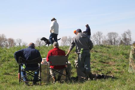 Hunters Labs Labrador Puppies For Sale Wisconsin Labrador Stud
