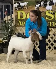 Don Smith Show 1st in class
