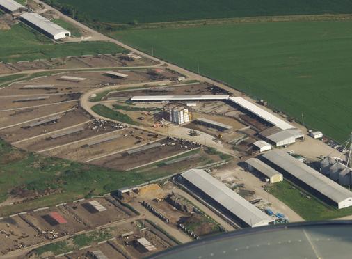 Cattle feedlot sample business plan