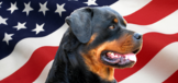 Rottie Nation Rottweiler Rescue