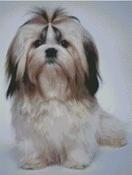 Cross Stitch Chart of a Shih Tsu