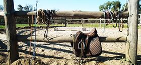 horses horse stud breaking in saddle beginner advanced experienced