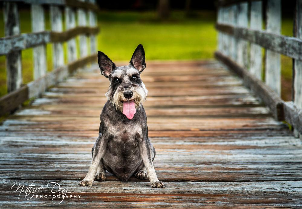 Nature Dog Photography Houston, Texas