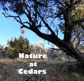 Explore Nature at Colwell Cedars Retreat