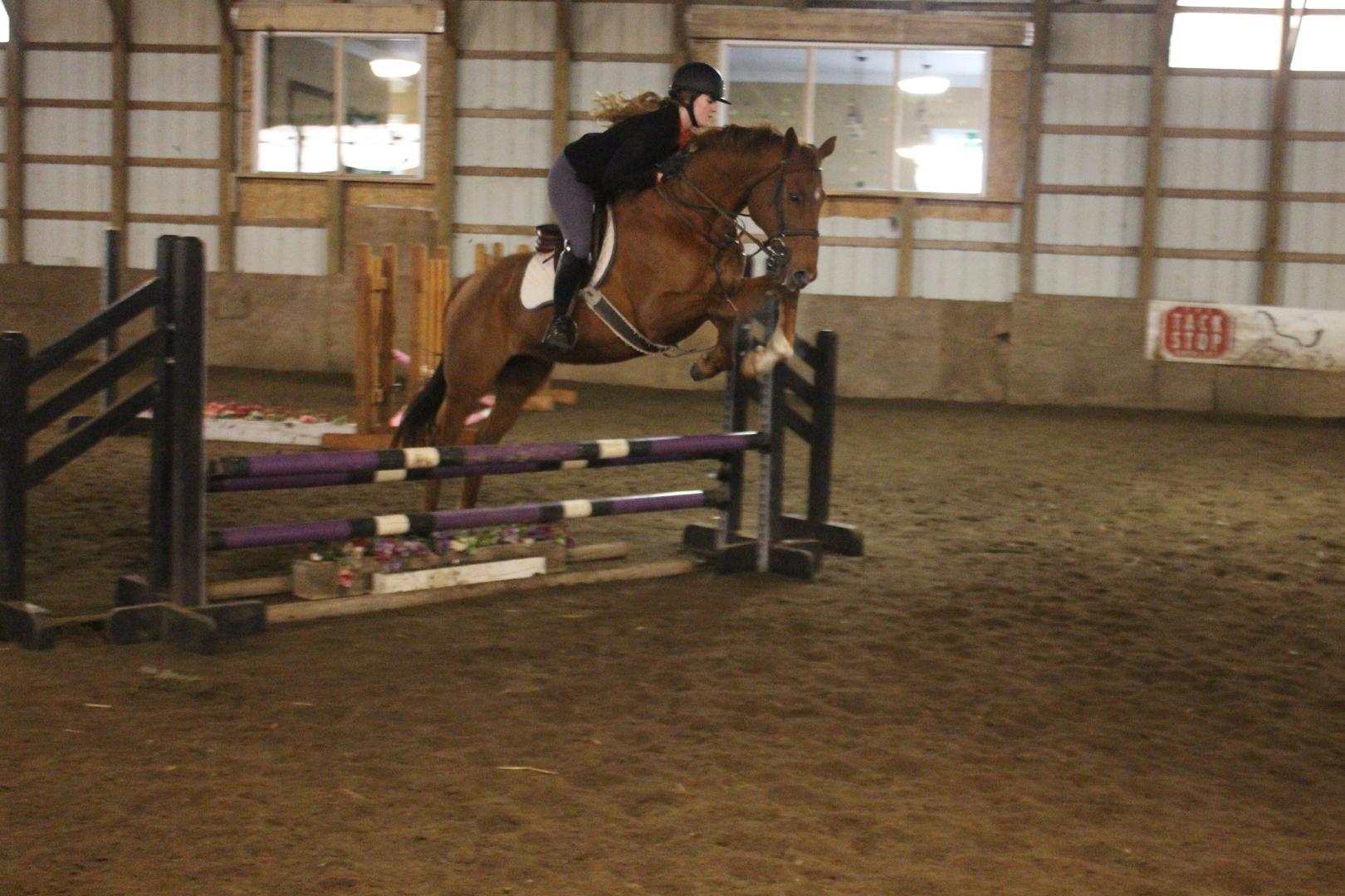 Michigan oakland county highland - Horse Riding Lesson Horse Training Blackstone Stables Highland Township Mi