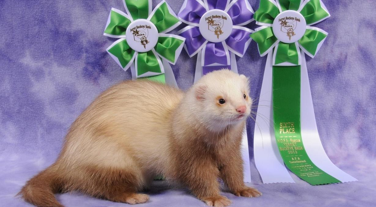 Ferret Buckeye Bash