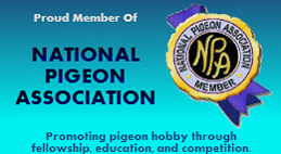 Proud member of the national pigeon association