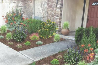 two flower beds on either side of a concrete walkway with large shrubs and various perennials on both sides in San Antonio texas