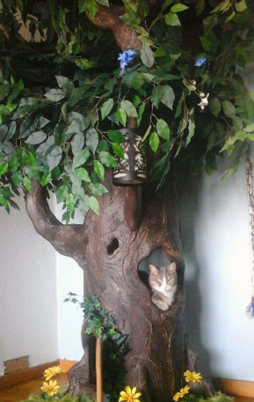 Cat Tree Tall Looks Like Tree