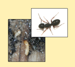 Some of the pests we take care of with our Structural Pest Services