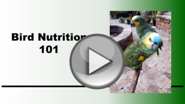 Bird Nutrition - Baiata Bird Sanctuary