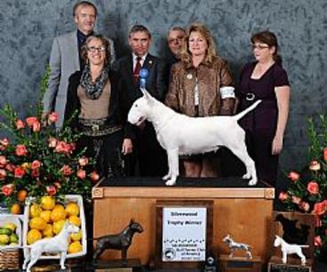 Glentom Bull Terriers -