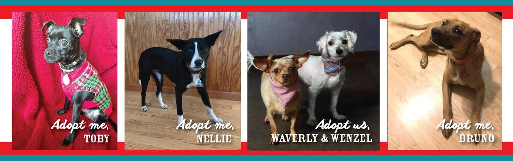 Lucky 13 Rescue adoptable dogs